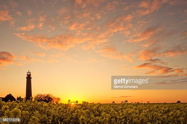 lighthouse and rape field sunset - bernd schunack stock pictures, royalty-free photos & images