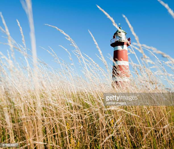 lighthouse, grass on foreground - gotland stock pictures, royalty-free photos & images