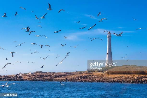 lighthouse in isla de lobos (island), punta del este, uruguay - maldonado uruguay stock pictures, royalty-free photos & images