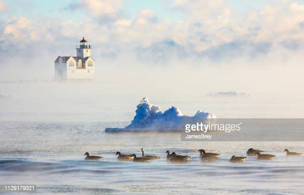 lighthouse in steaming foggy waters with geese and iceberg. - great lakes stock pictures, royalty-free photos & images
