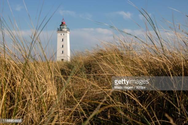 lighthouse seen from grassfield, hyllekrog, lolland, denmark - selandia fotografías e imágenes de stock