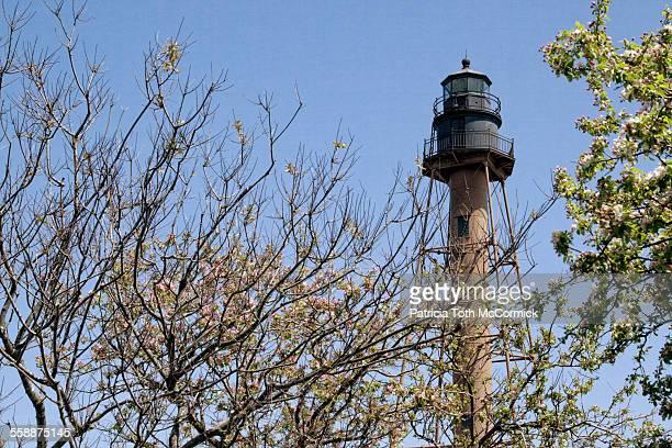 lighthouse tower seen through trees - massachusetts stock-fotos und bilder