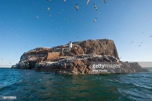 lighthouse with gannet colony, bass rock, uk - ロージアン ストックフォトと画像