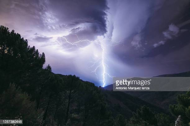 lighting bolt in a natural pine forest - lightning stock pictures, royalty-free photos & images