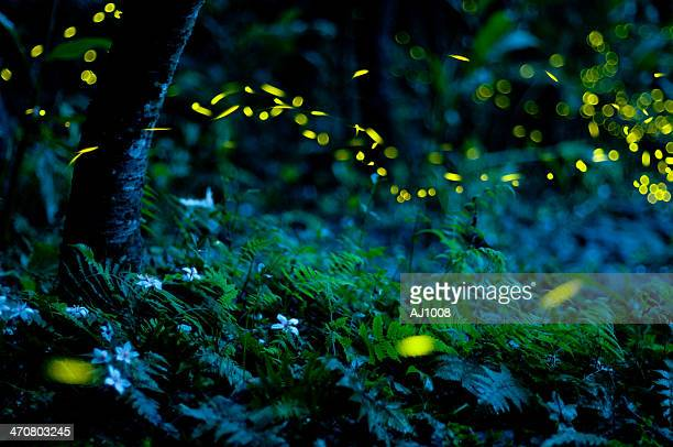 lighting bug - fireflies stock pictures, royalty-free photos & images