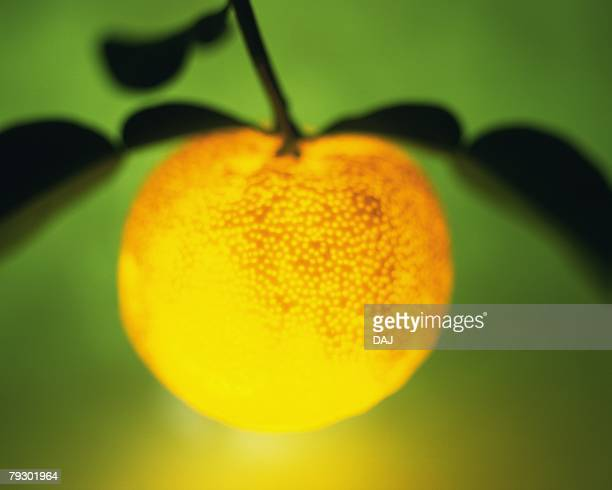 Lighting yuzu, front view, colored background, soft focus, defocused