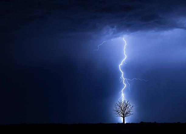 Lightning And Tree Wall Art