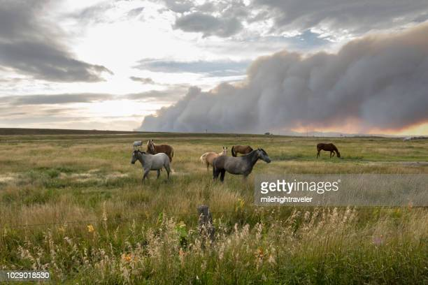 Lightning caused Arapahoe forest fire burns over horses grazing Wheatland Wyoming Rocky Mountains