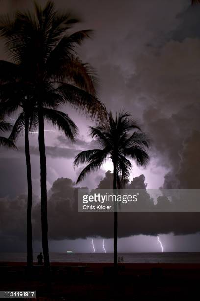 lightning flashes offshore behind palm trees at the beach, fort lauderdale, florida, usa - ominous stock pictures, royalty-free photos & images