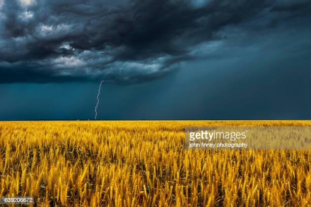lightning over golden crops. stunning sky's over colorado. usa - great plains stock pictures, royalty-free photos & images