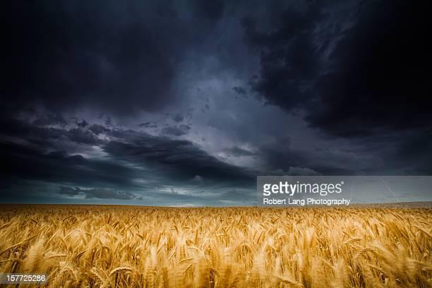 Lightning strike over wheat fields, Australia