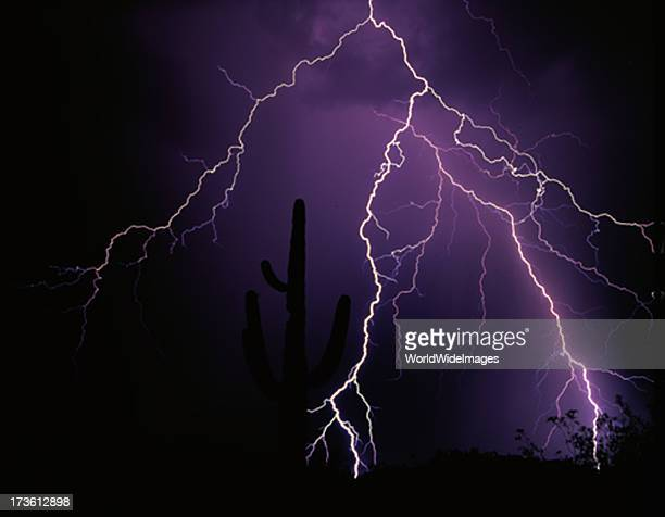 lightning strikes over Saquaro Cacti