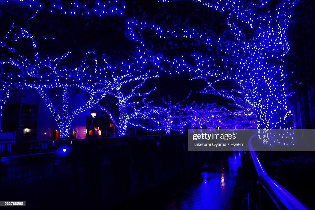 Lights Cover Trees At Night : Foto stock