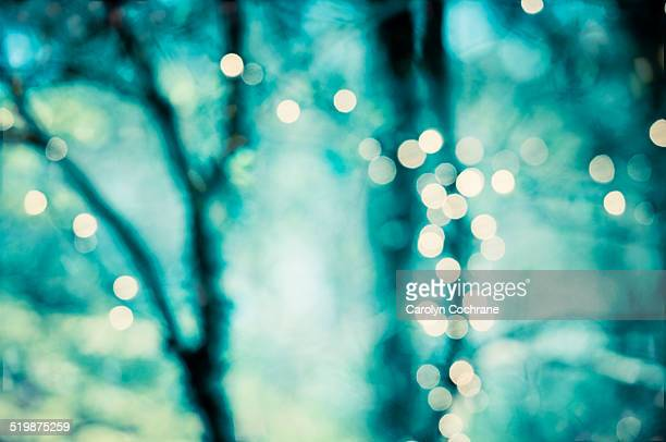 Lights Glowing in Trees with Teal Background