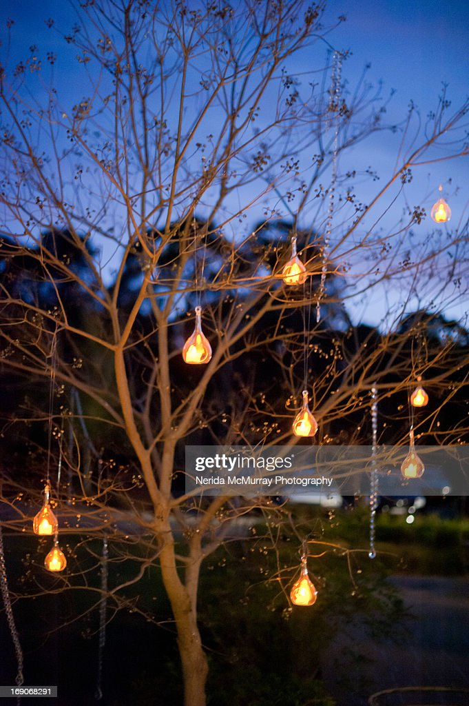 Lights In Trees At Night : Stock Photo