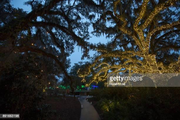 Lights of the Night at Brookgreen Gardens