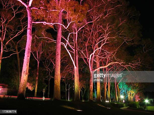 Lights shining on trees