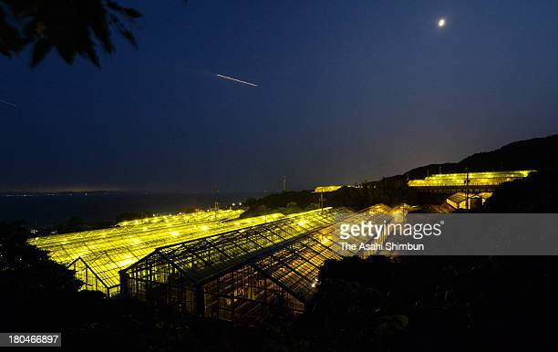 Lights to protect carnation against insects are illuminated in greenhouses on September 11 2013 in Awaji Hyogo Japan