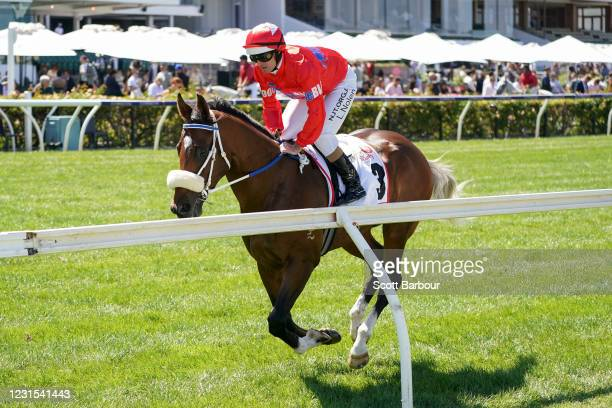 Lightsaber ridden by Luke Nolen on the way to the barriers prior to the running of the MSS Security Sires' Produce Stakes at Flemington Racecourse on...