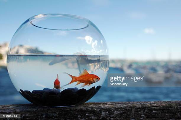 like a fish - irony stock pictures, royalty-free photos & images