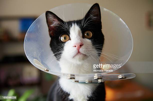 like a lamp-shade - protective collar stock pictures, royalty-free photos & images