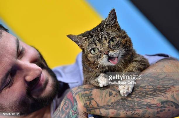 Lil Bub arrives at the premiere of EuropaCorp's 'Nine Lives' at TCL Chinese Theatre on August 1 2016 in Hollywood California