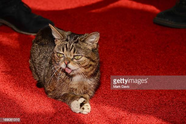 Lil' Bub attends The Big Live Comedy Show presented by YouTube Comedy Week held at Culver Studios on May 19 2013 in Culver City California