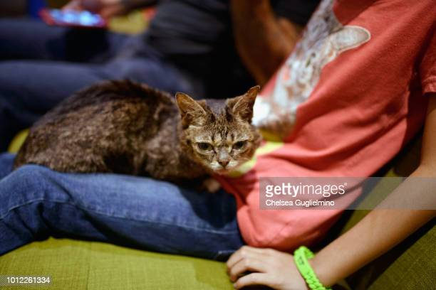 Lil Bub meets a fan at CatCon Worldwide 2018 at Pasadena Convention Center on August 4 2018 in Pasadena California