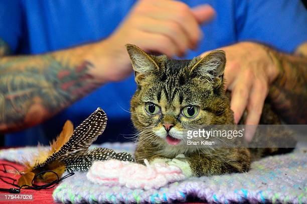 """Lil Bub promotes """"Lil Bub's Lil Book: The Extraordinary Life of the most Amazing Cat on the Planet"""" at Bookends Bookstore on September 3, 2013 in..."""