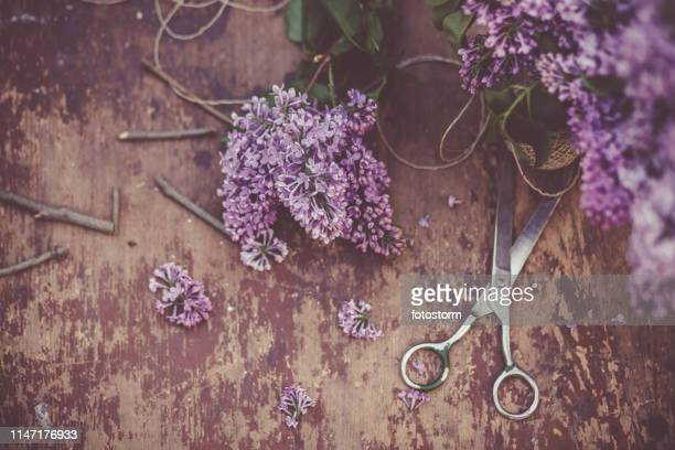 lilac flowers and scissors on wooden table - purple lilac stock pictures, royalty-free photos & images