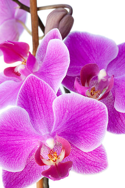 Lilac Orchid Wall Art