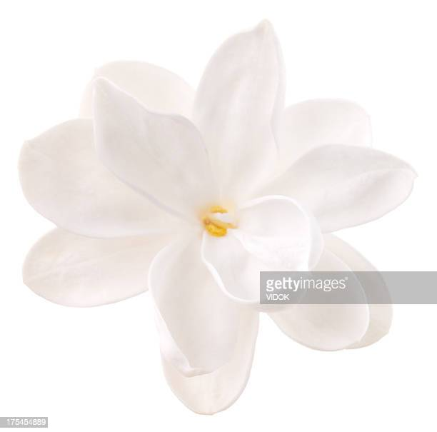 lilac - white stock pictures, royalty-free photos & images