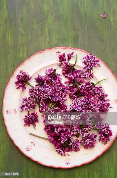 lilac sensation on plate - mai stock-fotos und bilder