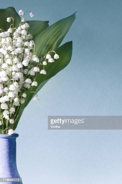 lilies of the valley (convallaria majalis) - bouquet of flowers in a vase  on a blue background - birthday card stock pictures, royalty-free photos & images