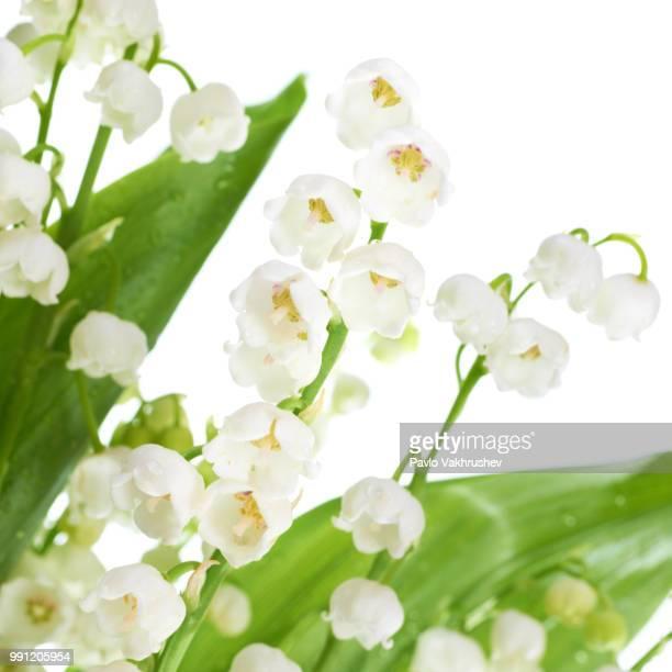 lilies of the valley - bouquet de muguet fotografías e imágenes de stock