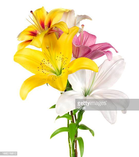 lilies. - bouquet stock pictures, royalty-free photos & images