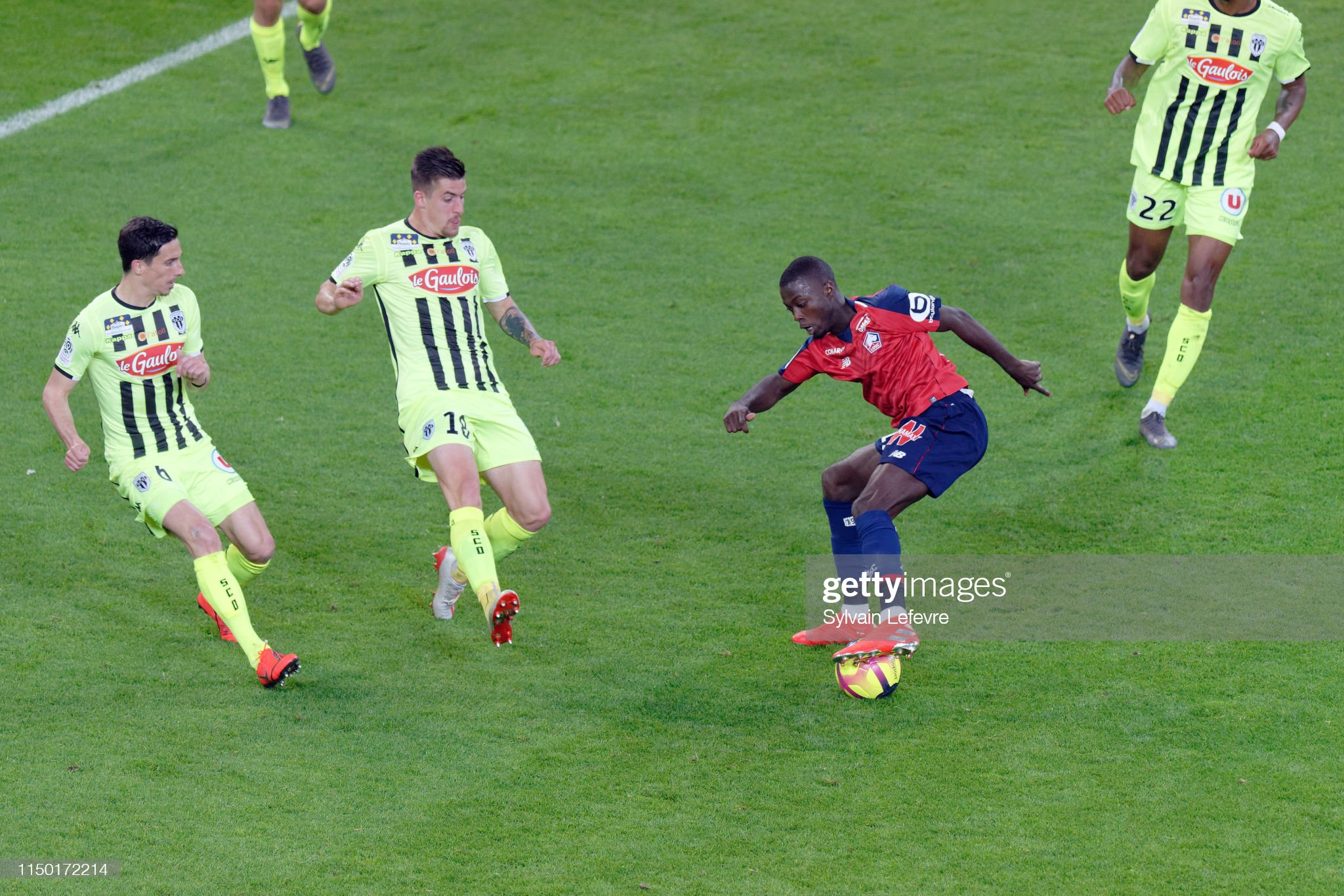 Lille OSC v Angers SCO - Ligue 1 : News Photo