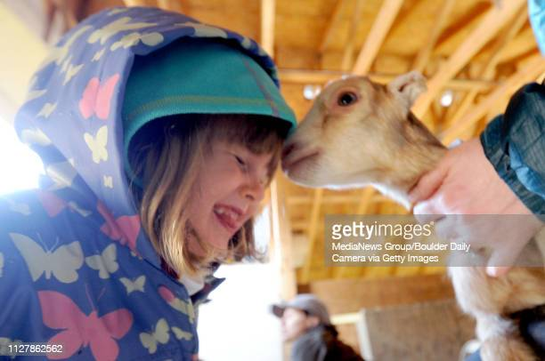 Lilli Jendrass gets a snuggle from one of the baby goats Mountain Flower Goat Dairy in Boulder held a 'baby goat shower' on Saturday