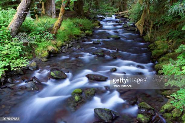 lillian creek, olympic national park, washington - brook mitchell stock pictures, royalty-free photos & images