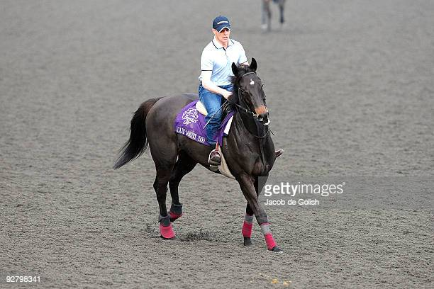 Lillie Langtry of the United States works out in the morning in preparation for the Breeders Cup 2009 at the Santa Anita Racetrack on November 5 2009...