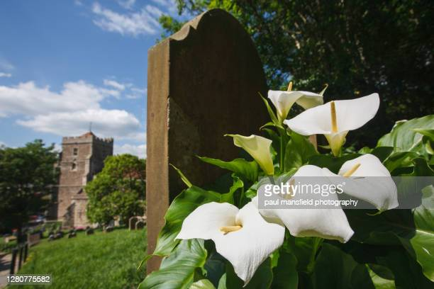 lillies and gravestone - funeral stock pictures, royalty-free photos & images