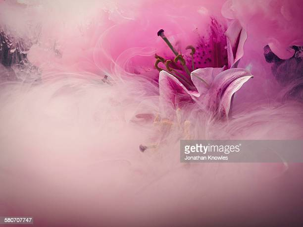 Lilly flower in a water tank with dissolving paint