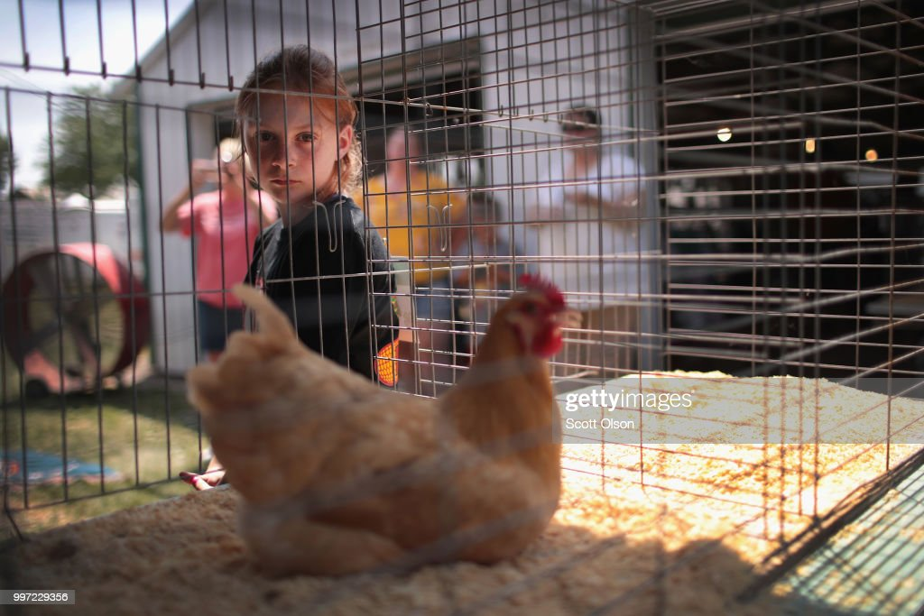 Lily Britten, 10, waits for her chicken, which she named Ginger, to be judged at the Iowa County Fair on July 12, 2018 in Marengo, Iowa. The fair, like many in counties throughout the Midwest, helps to nurture a new generation of farmers by teaching the fundamentals of quality livestock care and breeding. Farmers in Iowa and the rest of the country, who are already faced with decade-low profits, are bracing for the impact a trade war with China may have on their bottom line going forward.