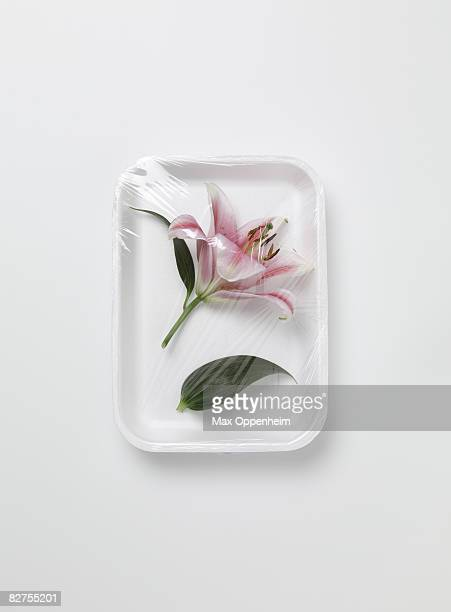 lily encased in plastic wrapping