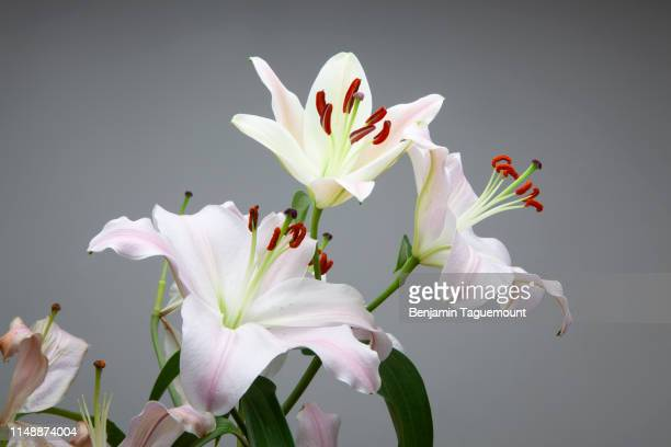 lily flower and orchid