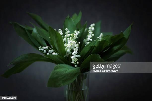 lily of the valley (convallaria majalis) in glass vase - muguet fleur photos et images de collection