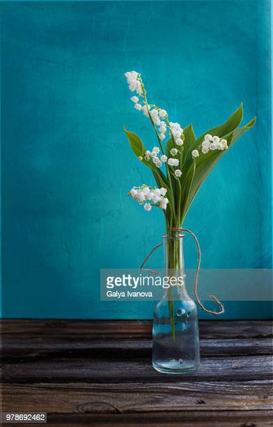 lily of the valley (convallaria majalis) - lily of the valley stock pictures, royalty-free photos & images