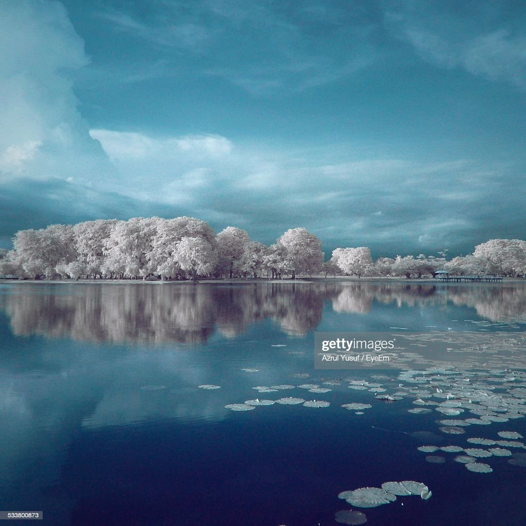 Lily Pads Floating On Lake : Foto stock