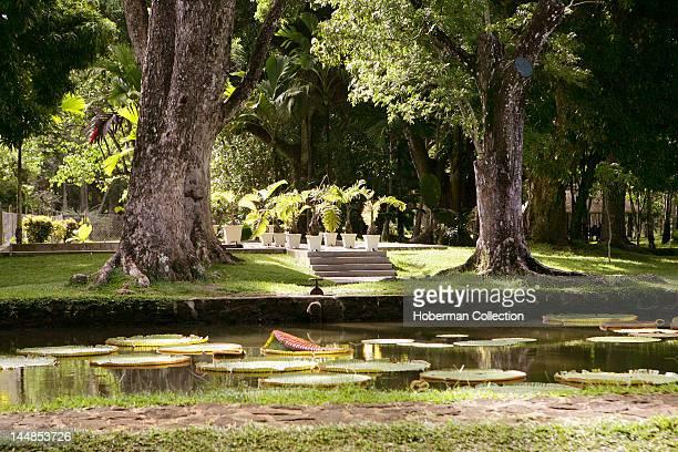 Lily Pond at Sir Seewoosagur Ramgoolam Botanical Gardens Pamplemousses Mauritius