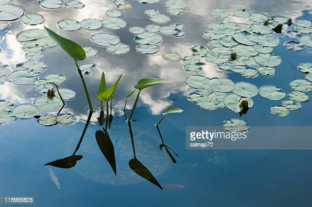 lily pond blue water reflecting clouds, peace and tranquilty image - peace lily stock pictures, royalty-free photos & images